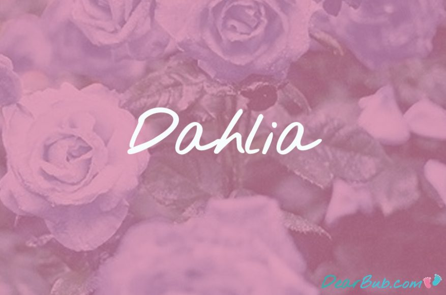 baby names for girls inspired by flowers-babynames-dahlia-dearbubblog