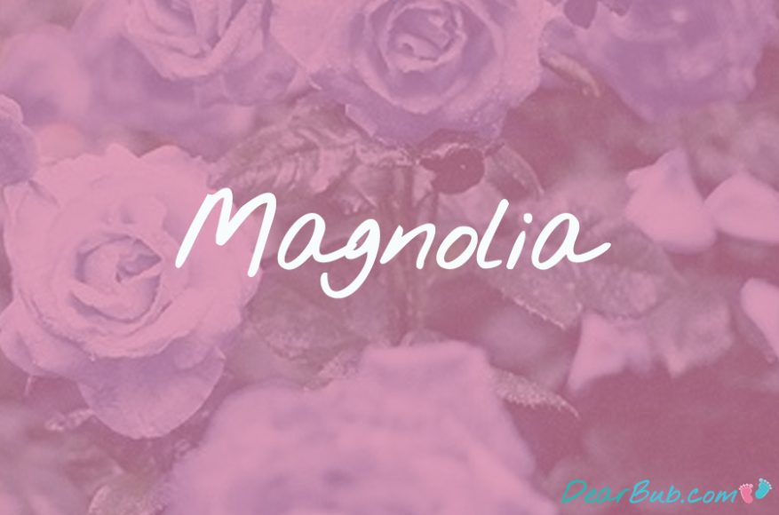baby names for girls inspired by flowers-babynames-magnolia-dearbubblog